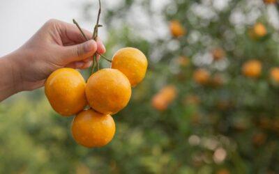 ¿Por qué es bueno consumir fruta de km.0?